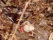 Hermit Crab in Rainforest
