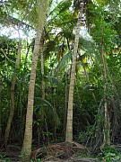 Jungle on Tortola